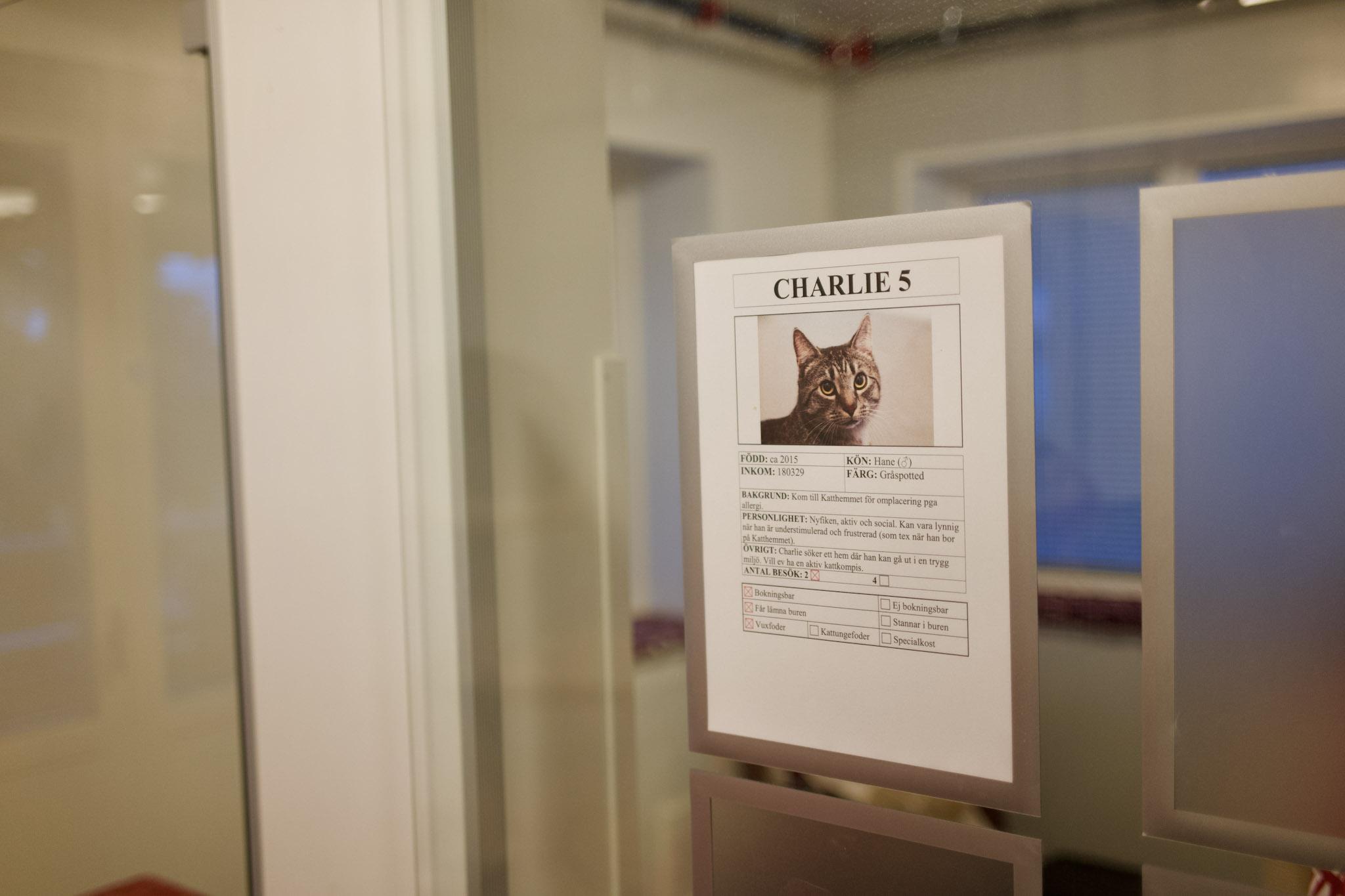 Charlie くんのお部屋にお邪魔した(5 匹目の Charlie だかららしい)
