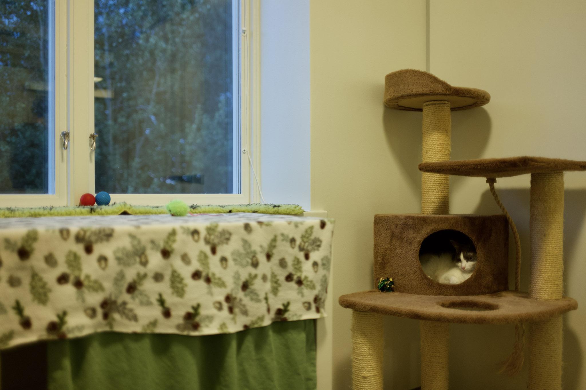 猫たちには個室が与えられている
